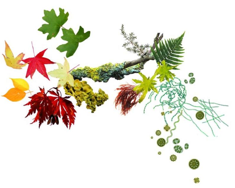 Phd thesis on anoxygenic photosynthetic bacteria